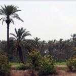 وزير الزراعة السوري: نخطط لزراعة مليون شجرة نخيل